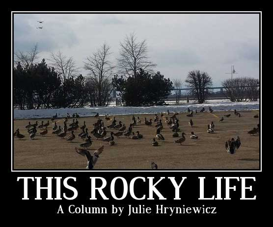 This Rocky Life